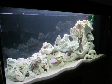 Aquarium Einrichten Steine